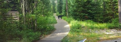 Facing the Bear part two